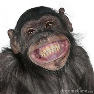 Nosso primo chimpanzé